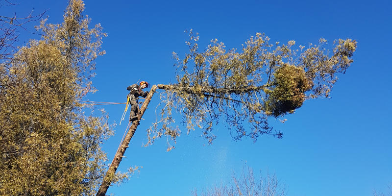 Leistungen-Baumpflege