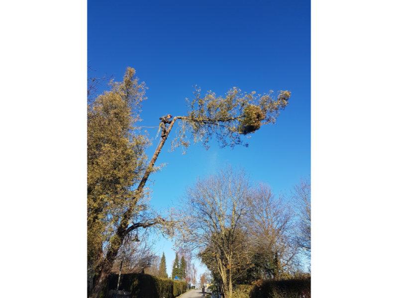 Leistungen-Baumpflege 05